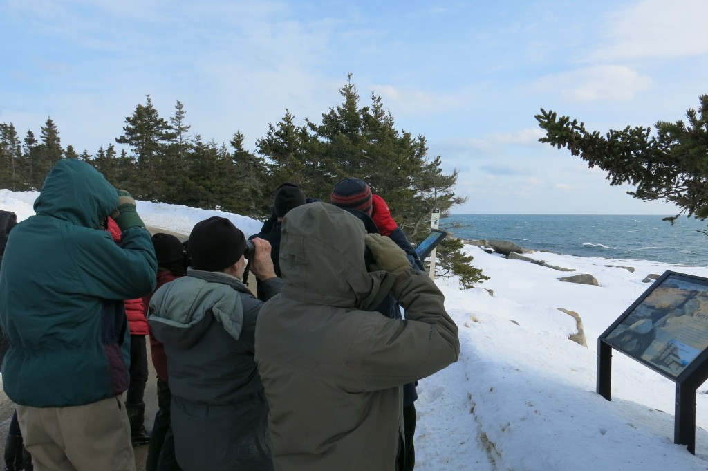 A bitter wind didn't stop Chuck Whitney's birding group from scouring the coast for eiders, goldeneyes, buffleheads, scoters, cormorants and gulls.