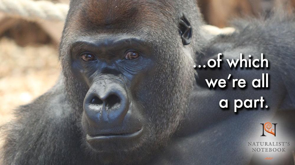 gorillaslidetext.jpg