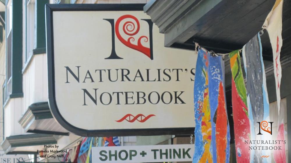 notebooksignslide.jpg