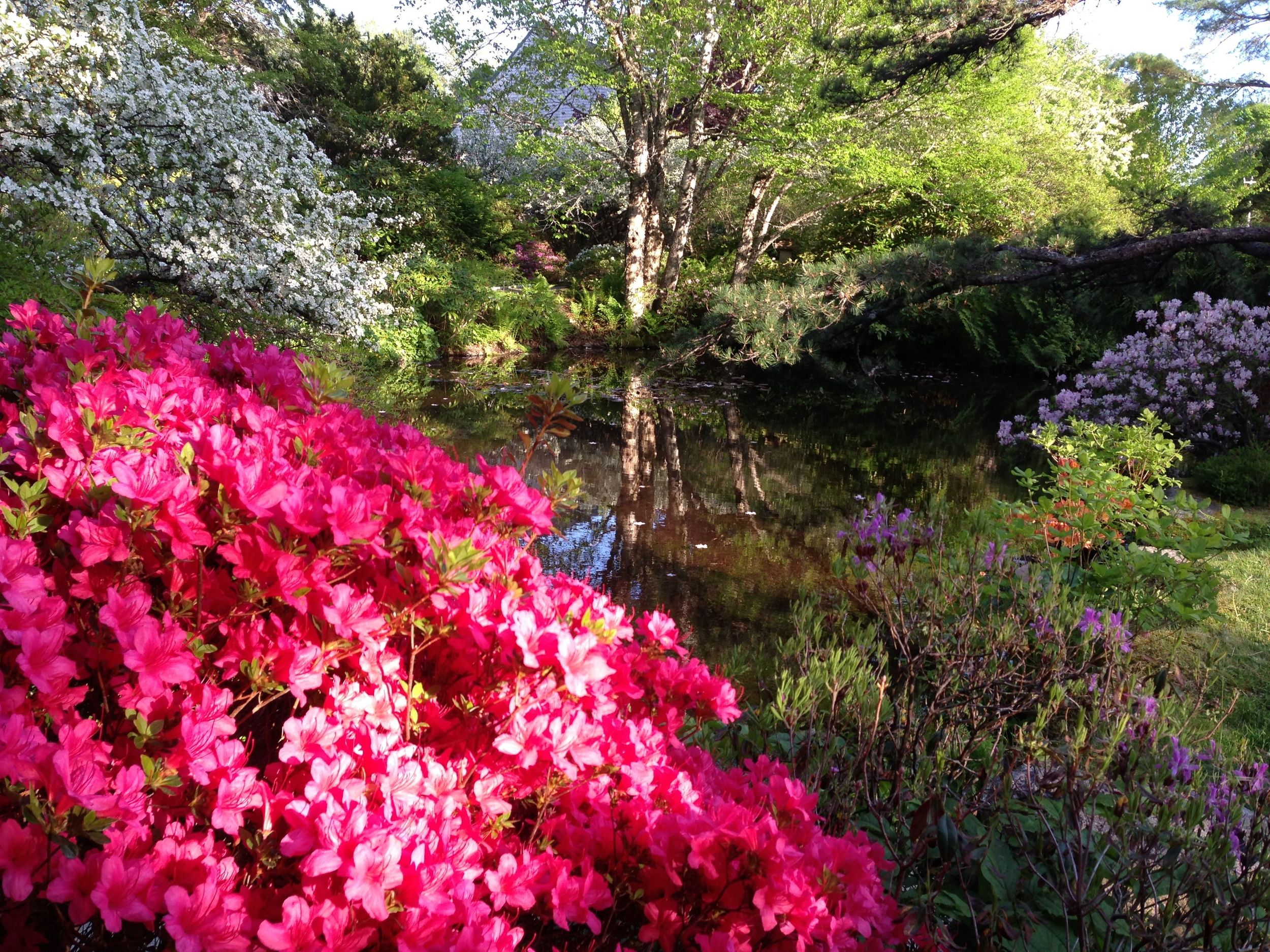 The Asticou is one of four stunning gardens within a few miles of The Naturalist's Notebook.