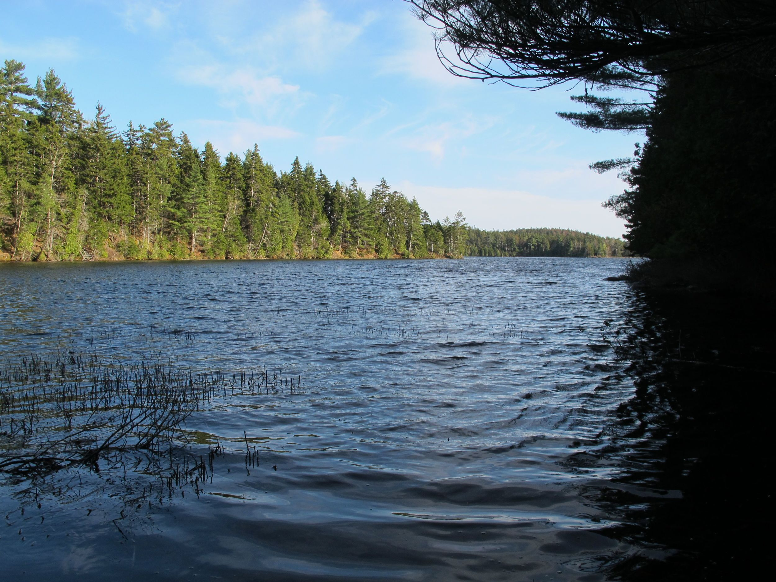 The edge of Lower Hadlock Pond.