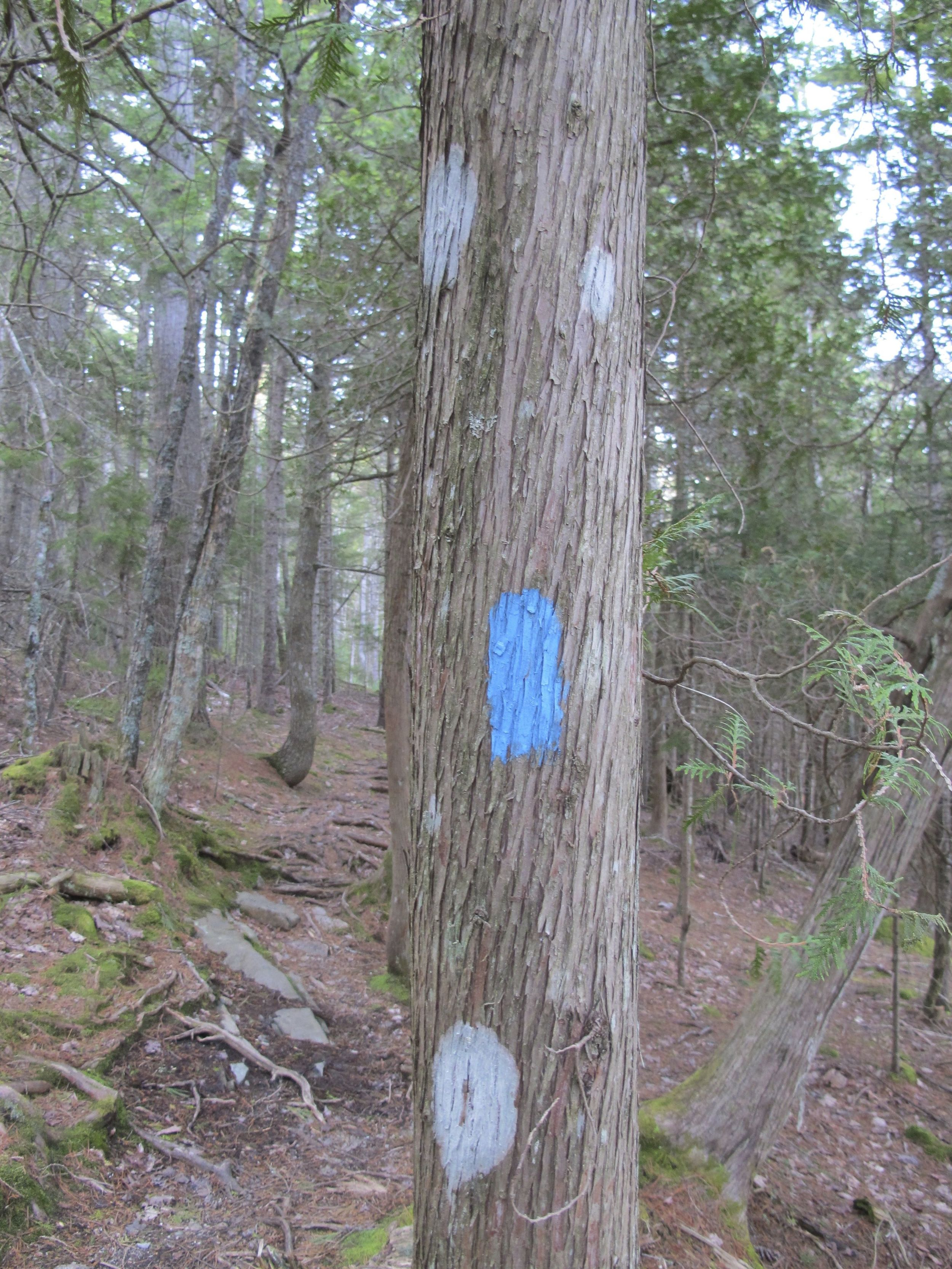 Can you tell the lichen from the paint dot marking the trail?