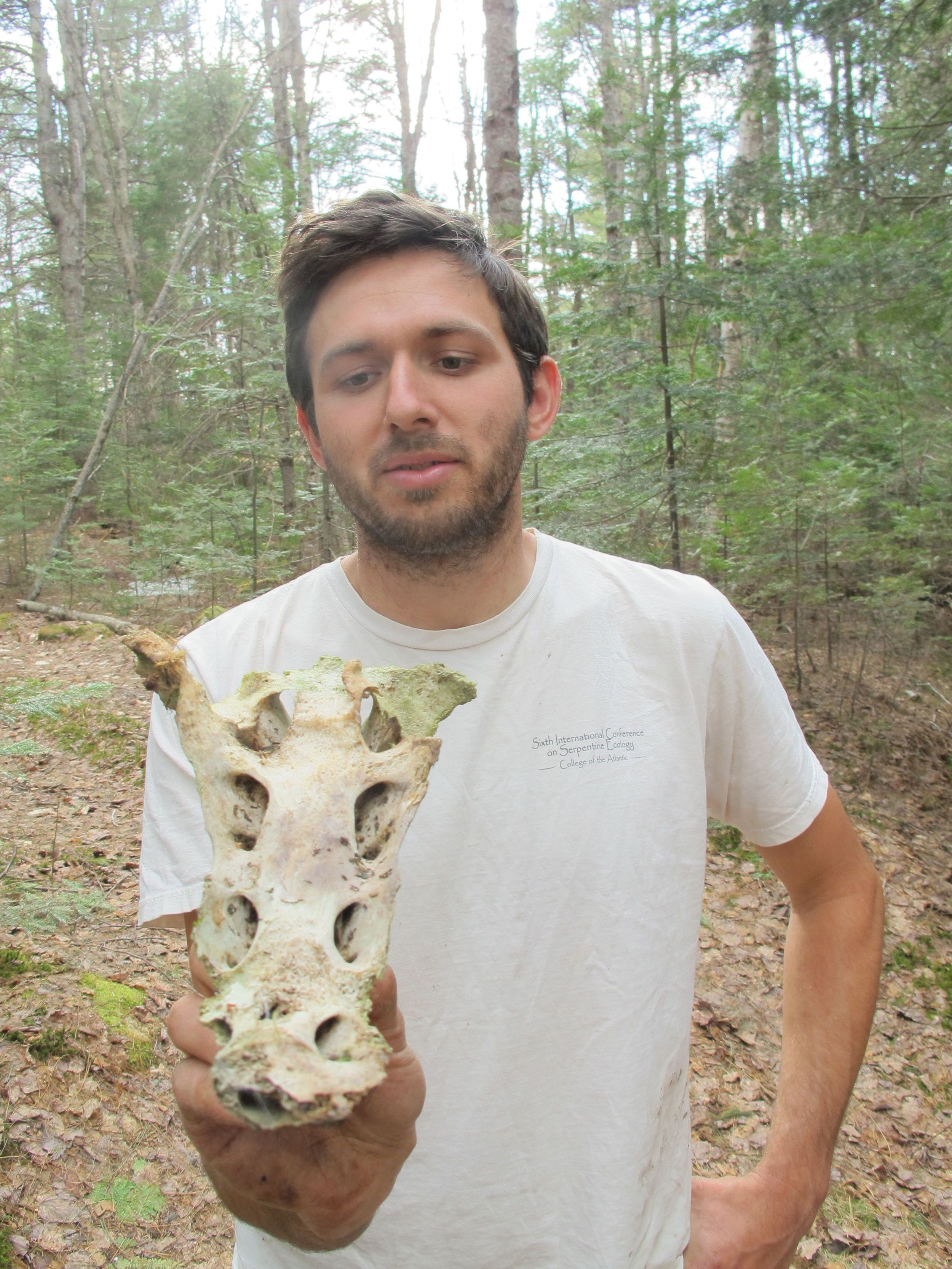 Brett found what we believe is part of a moose skull.