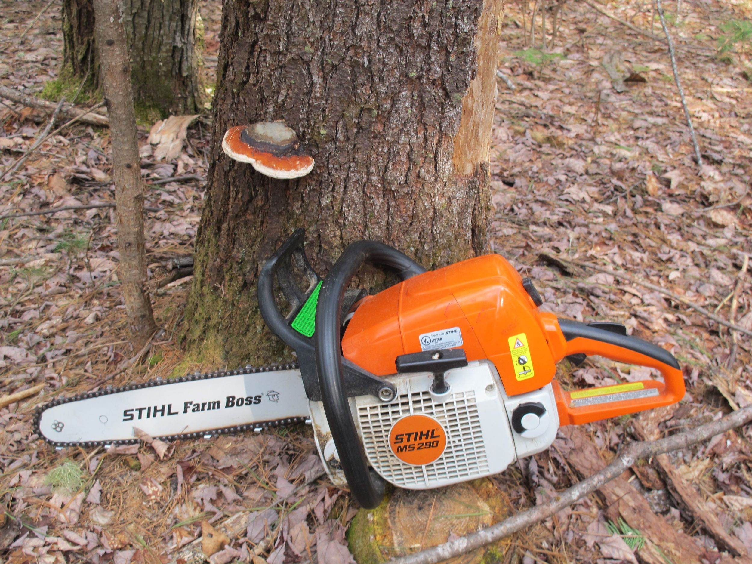 Did Stihl design this chainsaw to match a tree fungus? Or did the fungus evolve this coloration to blend into our modern forest society?