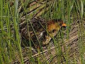 A yellow rail