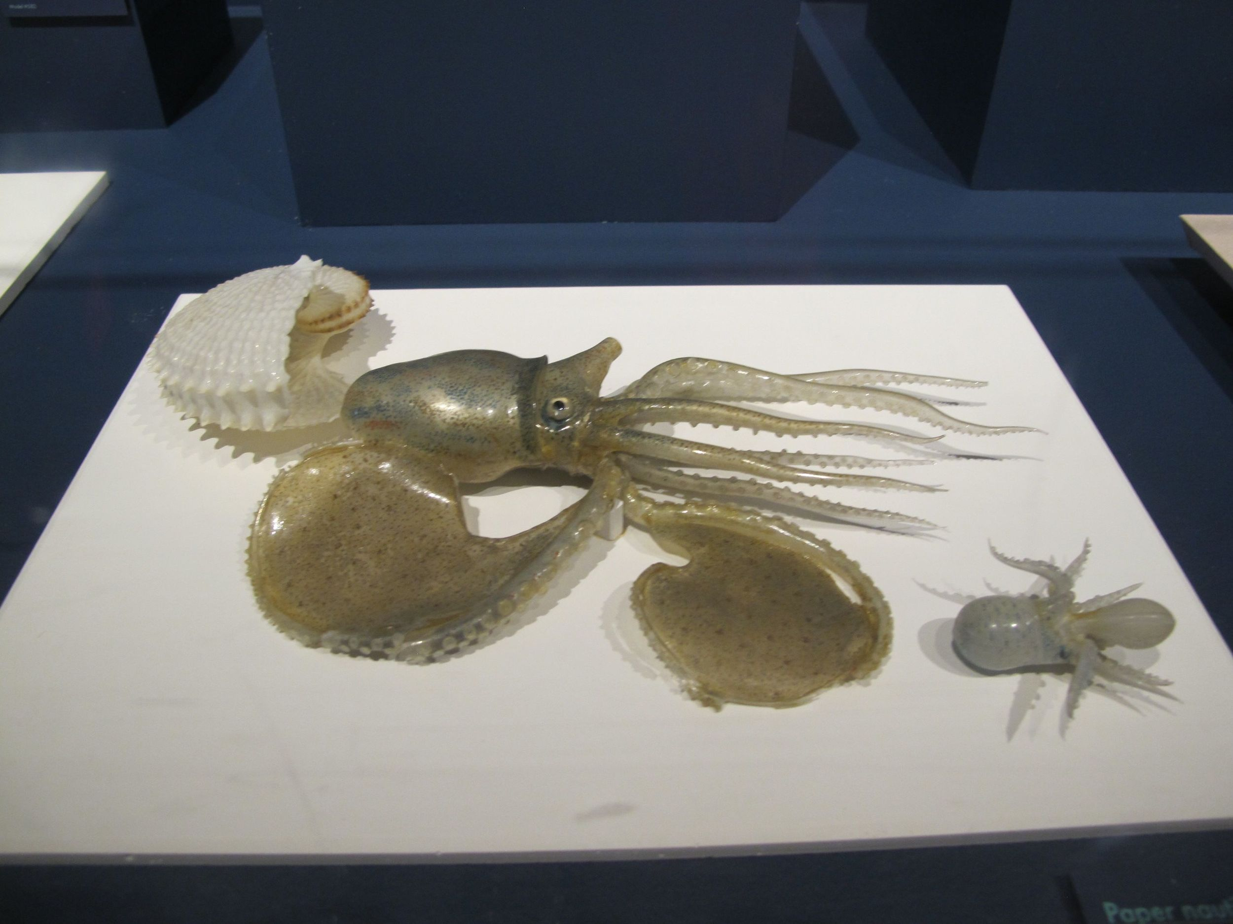 The elder Blaschka began making glass mollusks and other sea creatures before being commissioned to do his famous flowers.