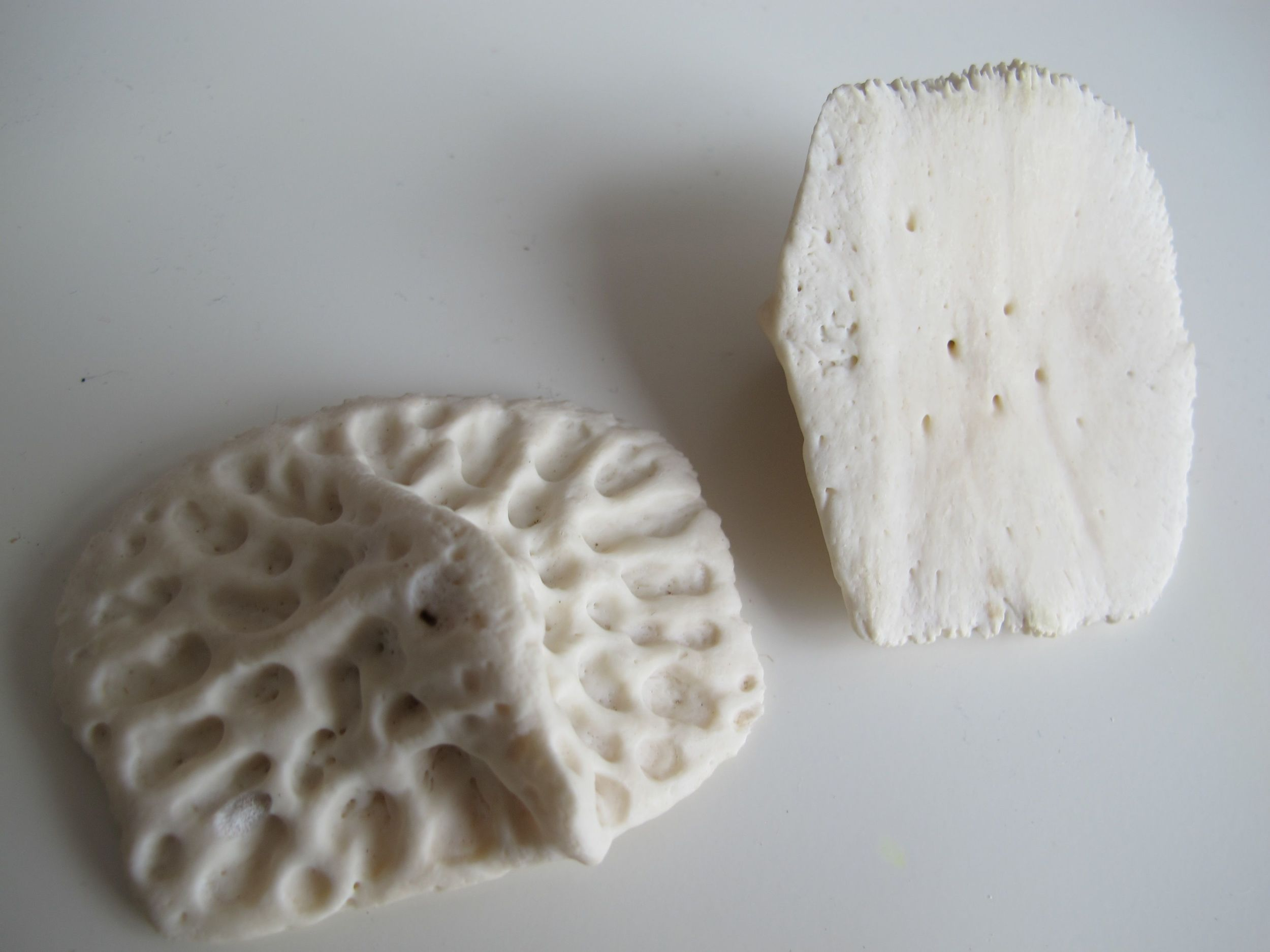 These circles of bones are dermal scutes from an alligator, which serve as body armor.