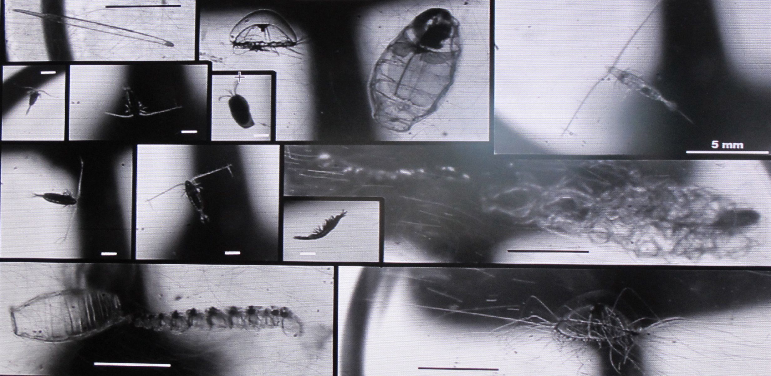 Pioneering research oceanographer Jules Jaffe of the Scripps Institution of Oceanography has invented all sorts of devices for studying the seas, including cameras that photograph the most minute life forms. This is a picture of  some of Jules's extraordinary zooplankton photos.  Jules helped design the optical system used to locate the Titanic.
