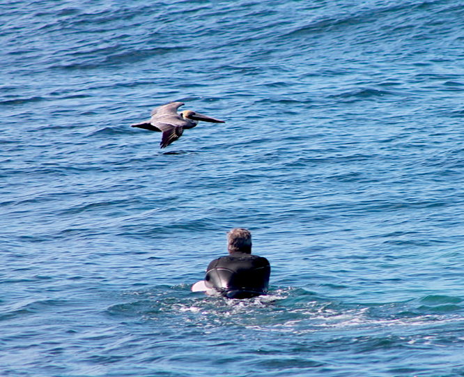 A pelican joined us in watching a boogie boarder ride the waves at Wind an Sea in La Jolla (just a few blocks from Mitt Romney's California home, by the way).