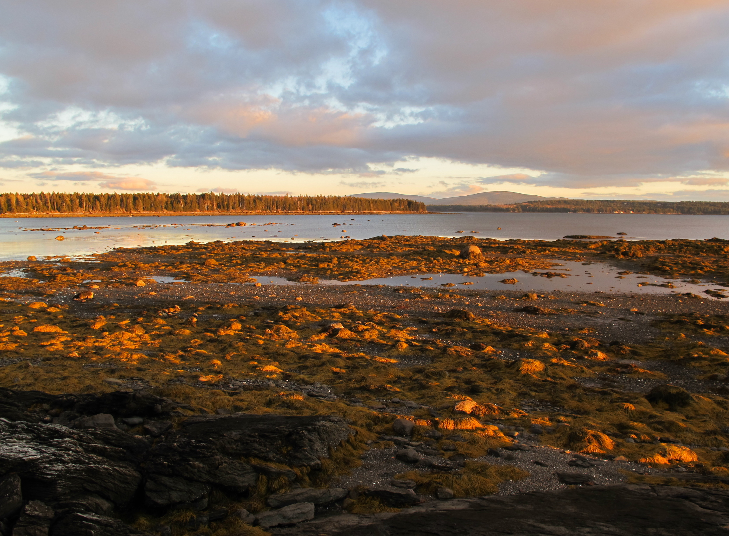An especially low tide (before the snow fell).