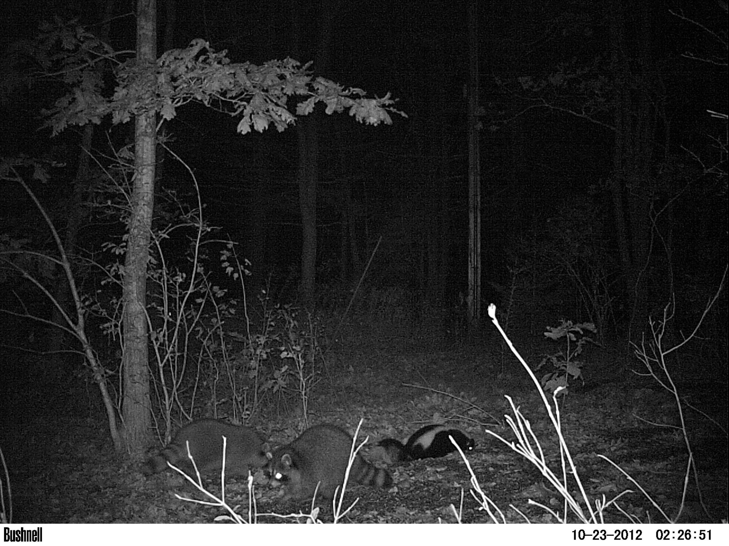 In case you didn't see it on our Facebook page, here's a shot from the new motion-triggered wildlife camera that Eli, Virginia, Julie and Patrick gave us for letting them live at our house.