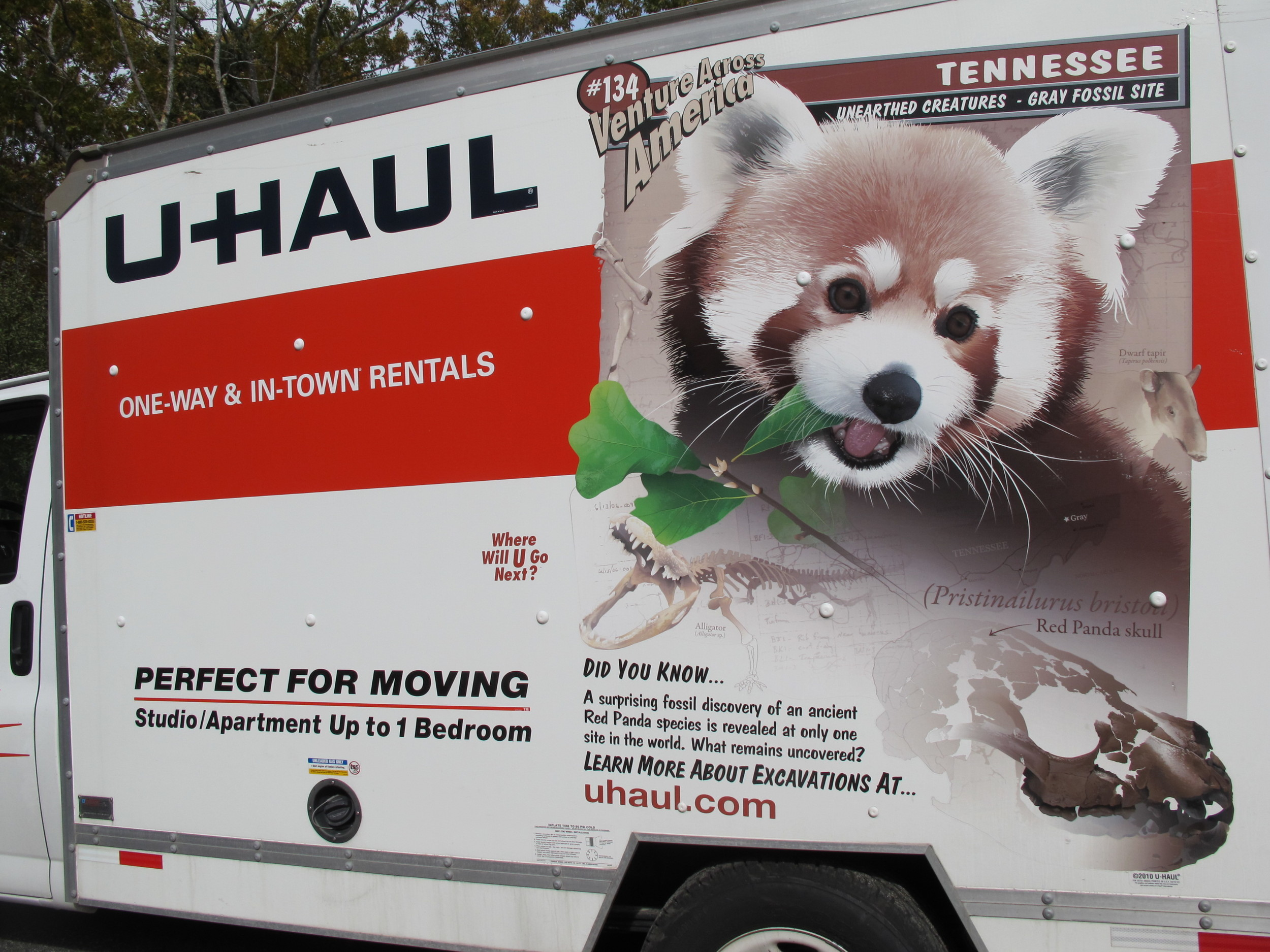 The Red Panda-mobile not only held all the parts and pieces of our history-of-the-universe installation, but also bore a Naturalist's Notebook-worthy message about animals and natural history.
