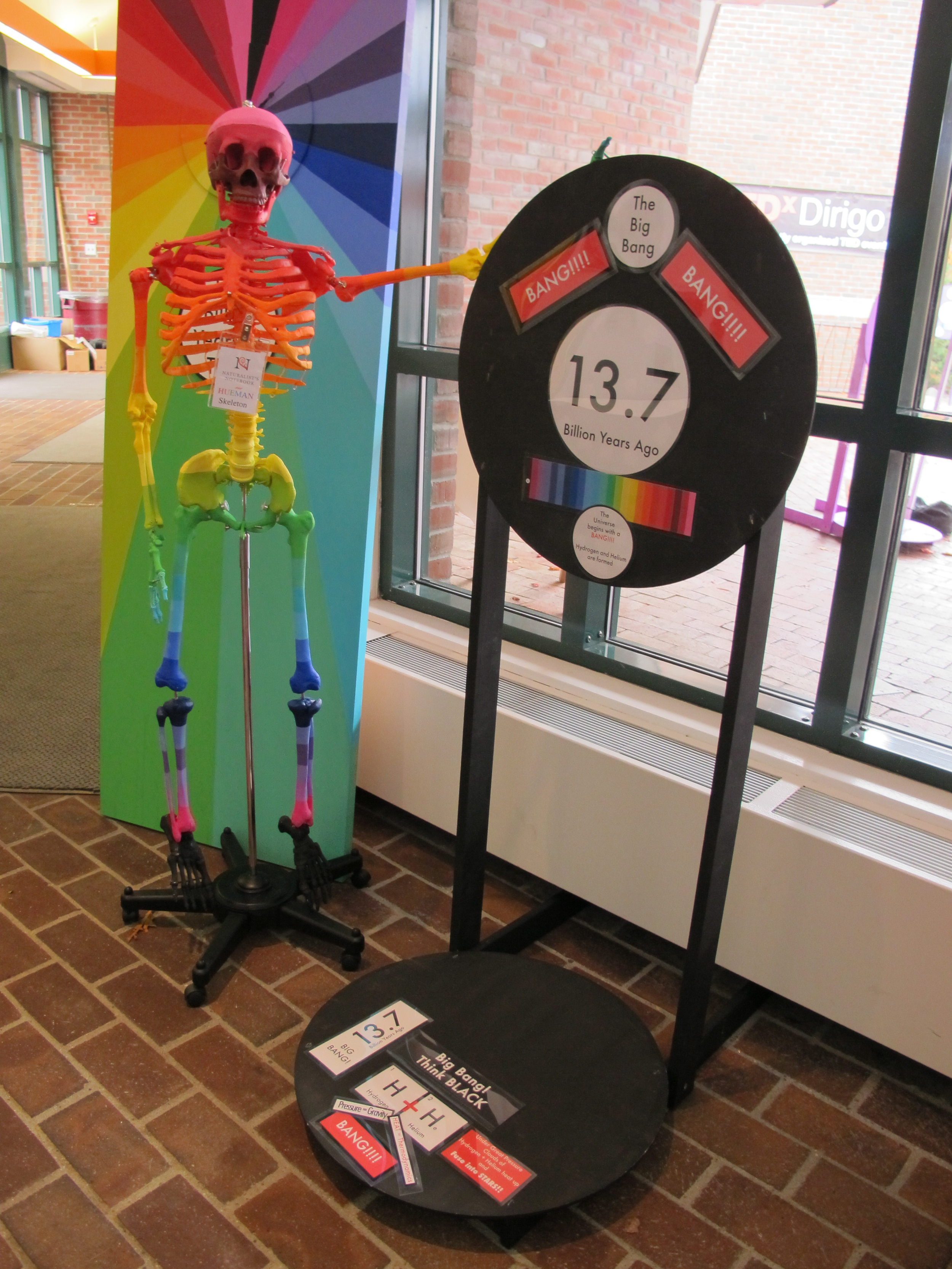 The HUEMAN skeleton looked splendid inside the art center, hanging out with the Big Bang.