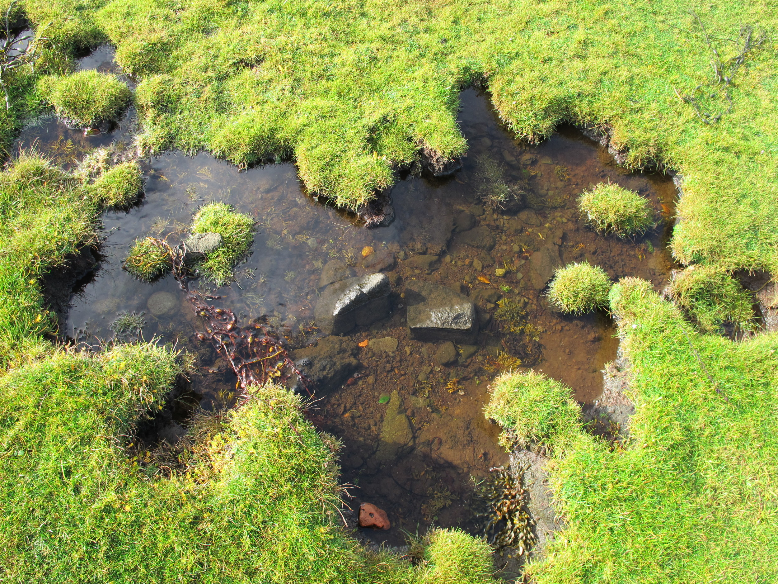 Lovely grass-rimmed pools like this dotted the edge of the intertidal zone.