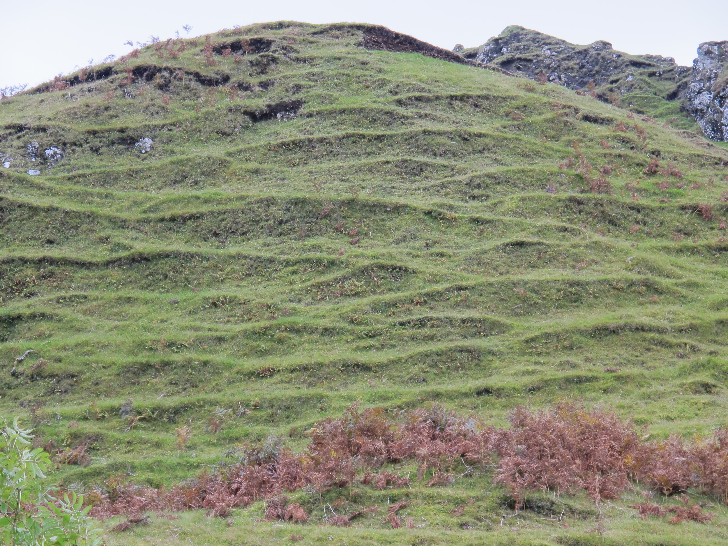 Centuries of sheep trails have carved permanent wrinkles into the rounded hills at Fairy Glen.