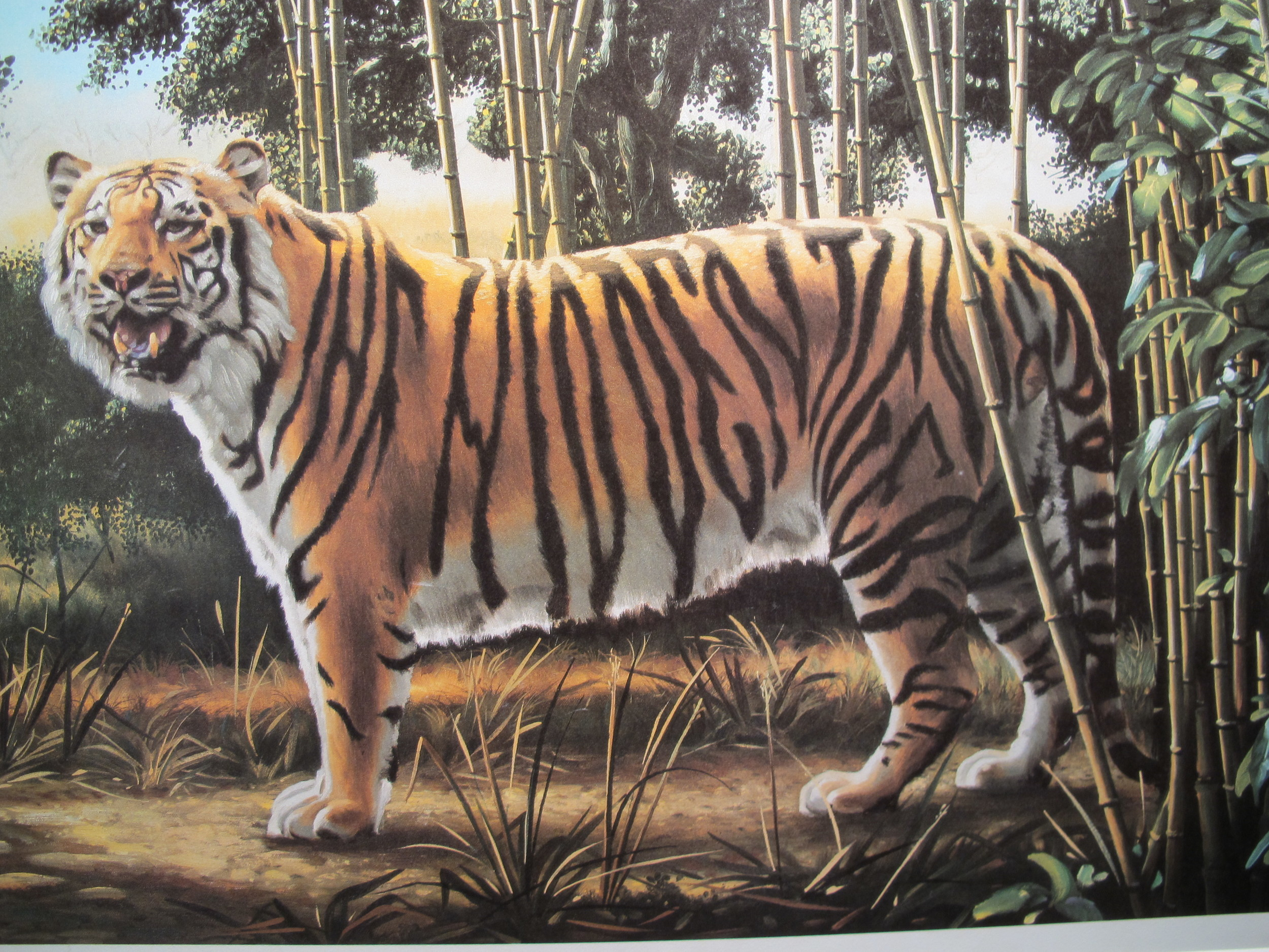 Can you find the hidden tiger in this photo? It's also a visual trick from the Camera Obscura.