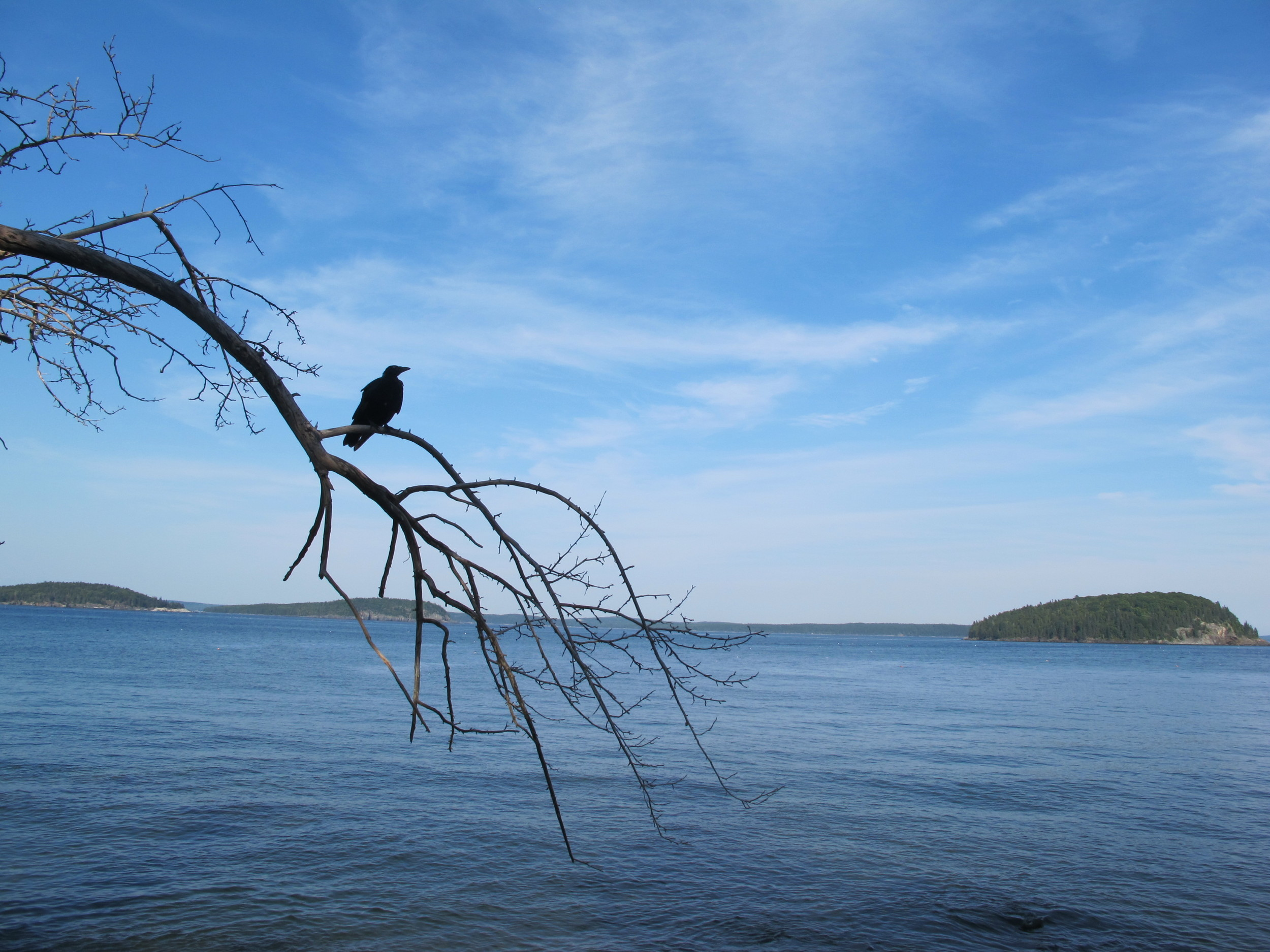 A young-looking crow was perched along the Shore Path in Bar Harbor late one afternoon this week as Pamelia and I took a break from Notebook activities to rendezvous with a writer/educator/hiker with whom we hope to start collaborating. Those are a few of the Porcupine Islands in the distance.