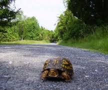turtlecross