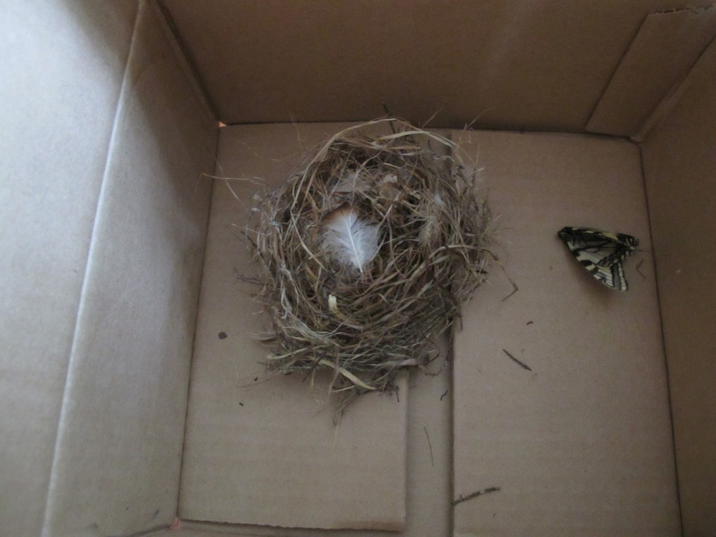 When we got home one night, someone had left in our mailbox a bird's nest inside a cardboard carton. This sort of thing didn't happen before we started the Notebook, but nowadays people bring us squirrel sculls, dead beetles, you name it. And we love it.