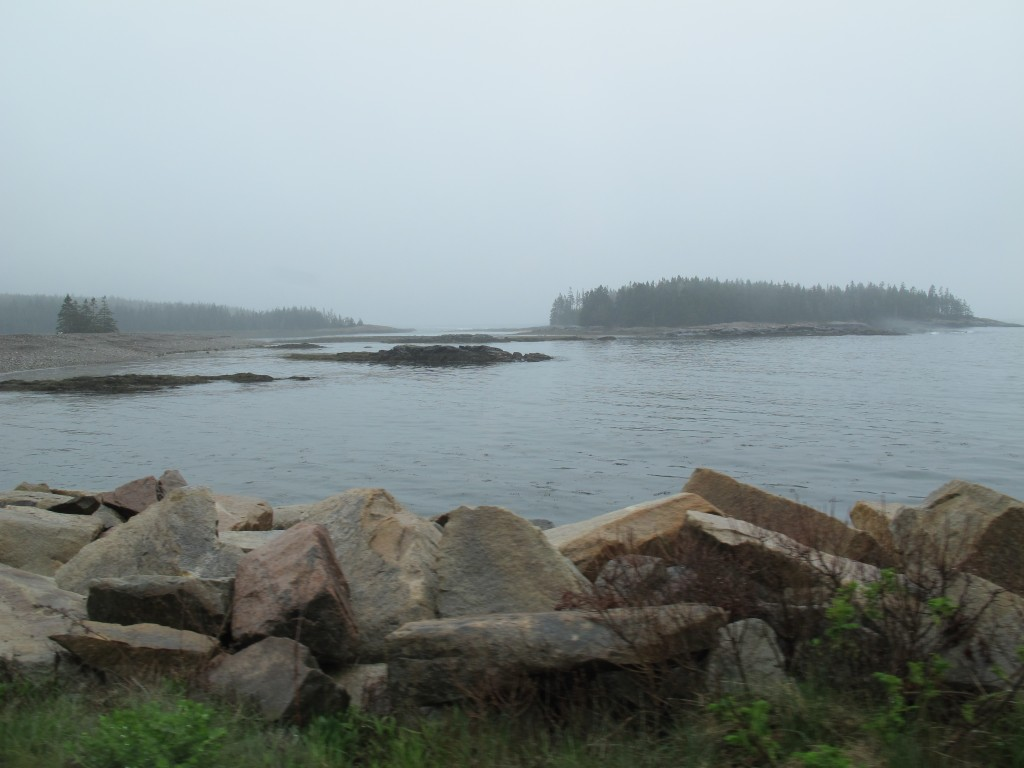 The shoreline near SERC. No sunshine on this day—that is, no SERC du soleil.
