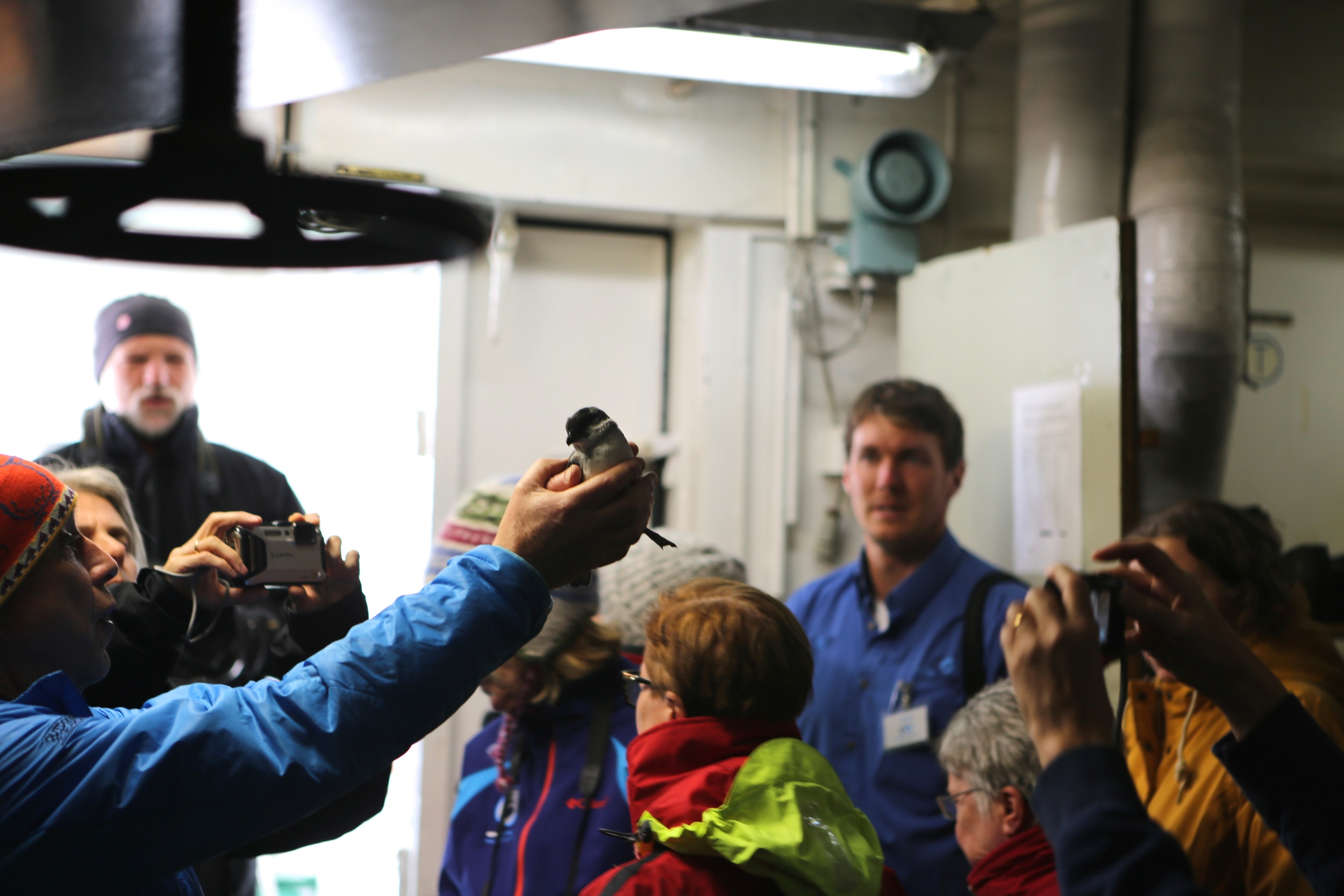Simon Boyes held up the web-footed common diving petrel for all of us to see before releasing it from the side of the ship.