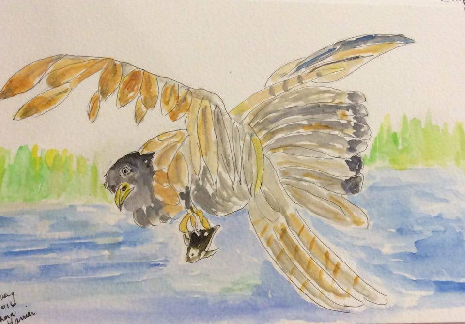 Here are Laurie Rothberg's northern harrier painting...