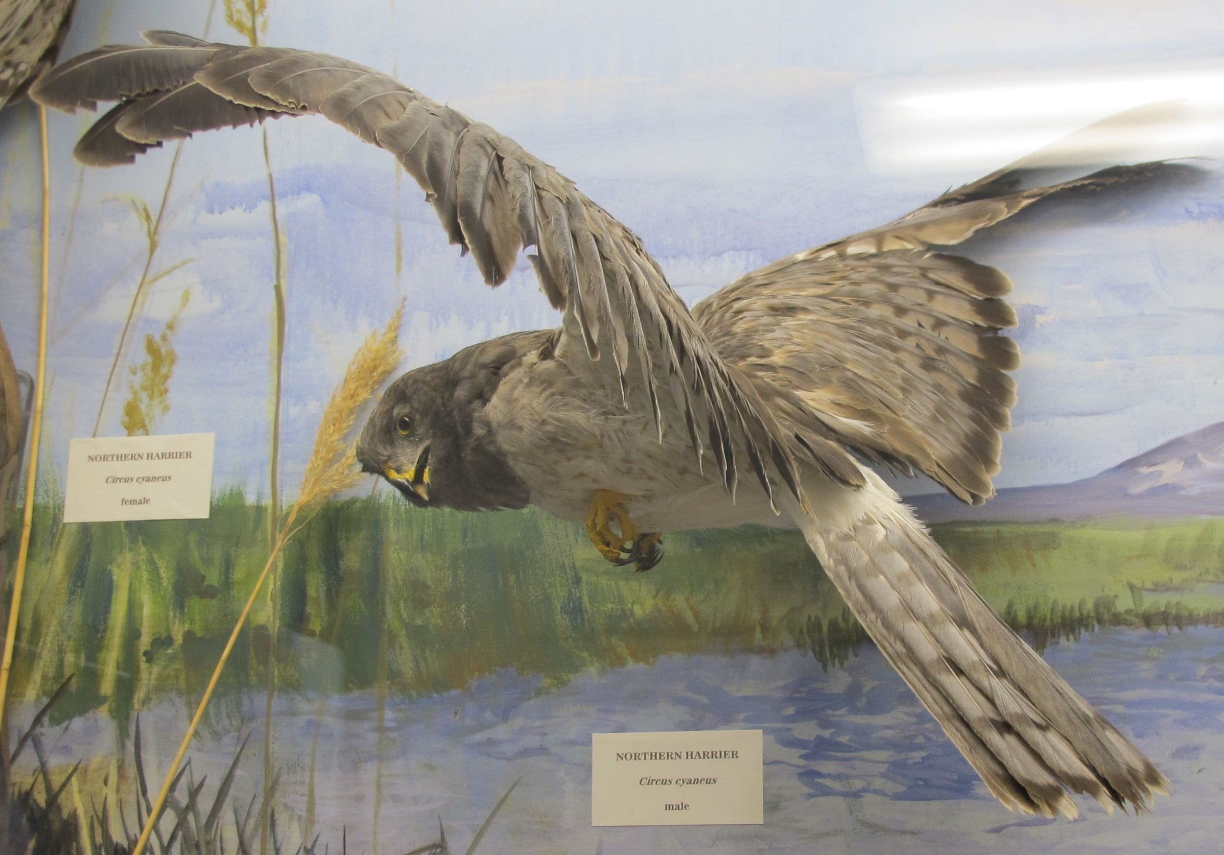 ...and the photo that inspired it. We took this picture at the visitors' center at the Malheur National Wildlife Refuge.