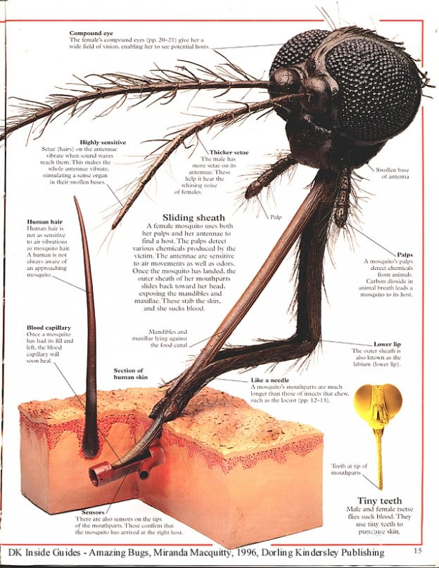 In case you were wondering what a female mosquito's bite looks like up close...