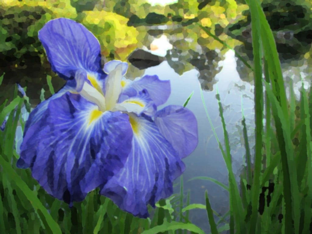 This is a watercolor twist on an iris Pamelia photographed at the Asticou Azalea Gardens on Mount Desert Island.