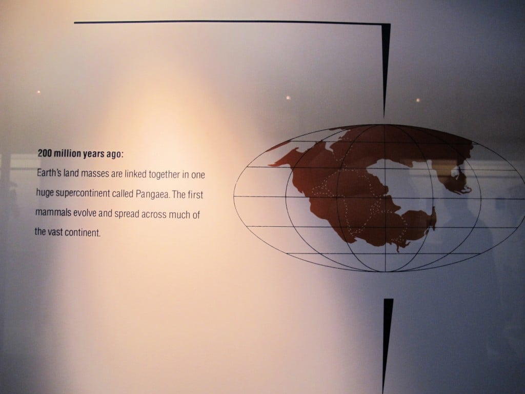 In a recent blog post I showed a mussel shell that resembled a globe with the continents merged. I said that the continents looked that way hundreds of millions of years ago. Well, here's a map of the Earth from 200 million years ago, when continents were connected in a supercontinent called Pangaea. Note that what's now Maine was connected to Africa and was below the equator. The continental plates are still constantly shifting beneath our feet. Right now Maine and the rest of North America are moving away from Europe, toward Asia, at the same rate your fingernails grow.