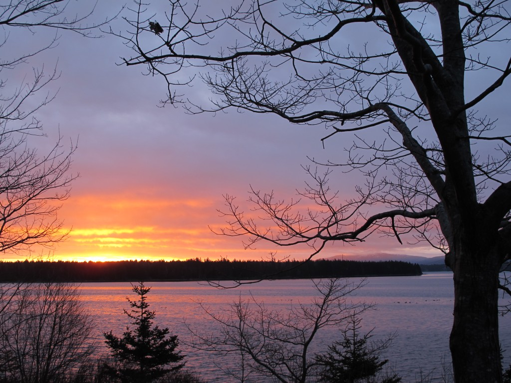 Just to illustrate how the Sun's position is changing (and show you how beautiful Maine is, as E.B. White knew), here's a shot of yesterday's sunrise at our house. Back in December, the Sun rose on the far side of that tree and those mountains on the right.