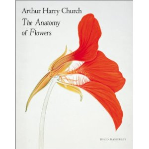 Though Arthur Harry Church never thought of himself as an artist, his flower paintings have been compared to Georgia O'Keefe's.
