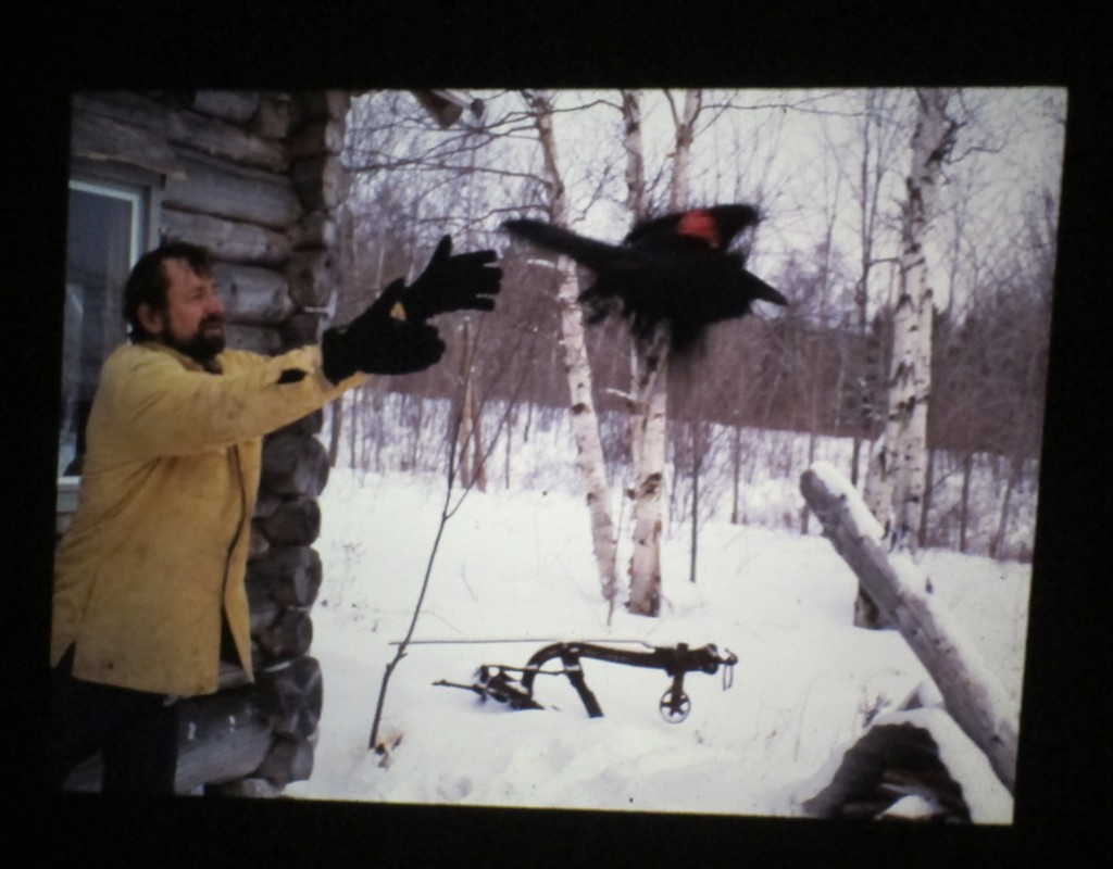 Here's an older shot of Bernd releasing a tagged raven at his cabin in western Maine.
