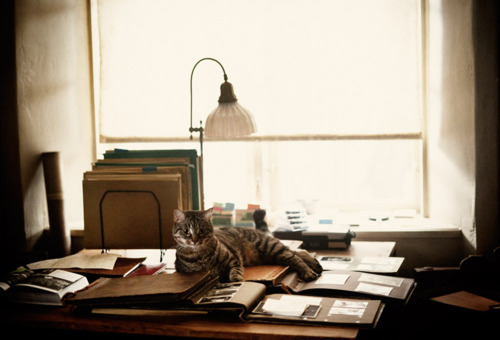 Tjorven, the cat in the movie, lives indoors and outdoors—a combination that often ends badly for one animal or another.
