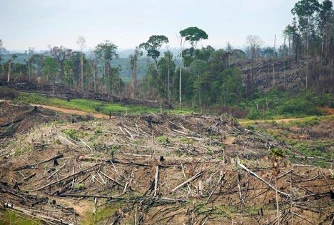 A former Sumatran rain forest.