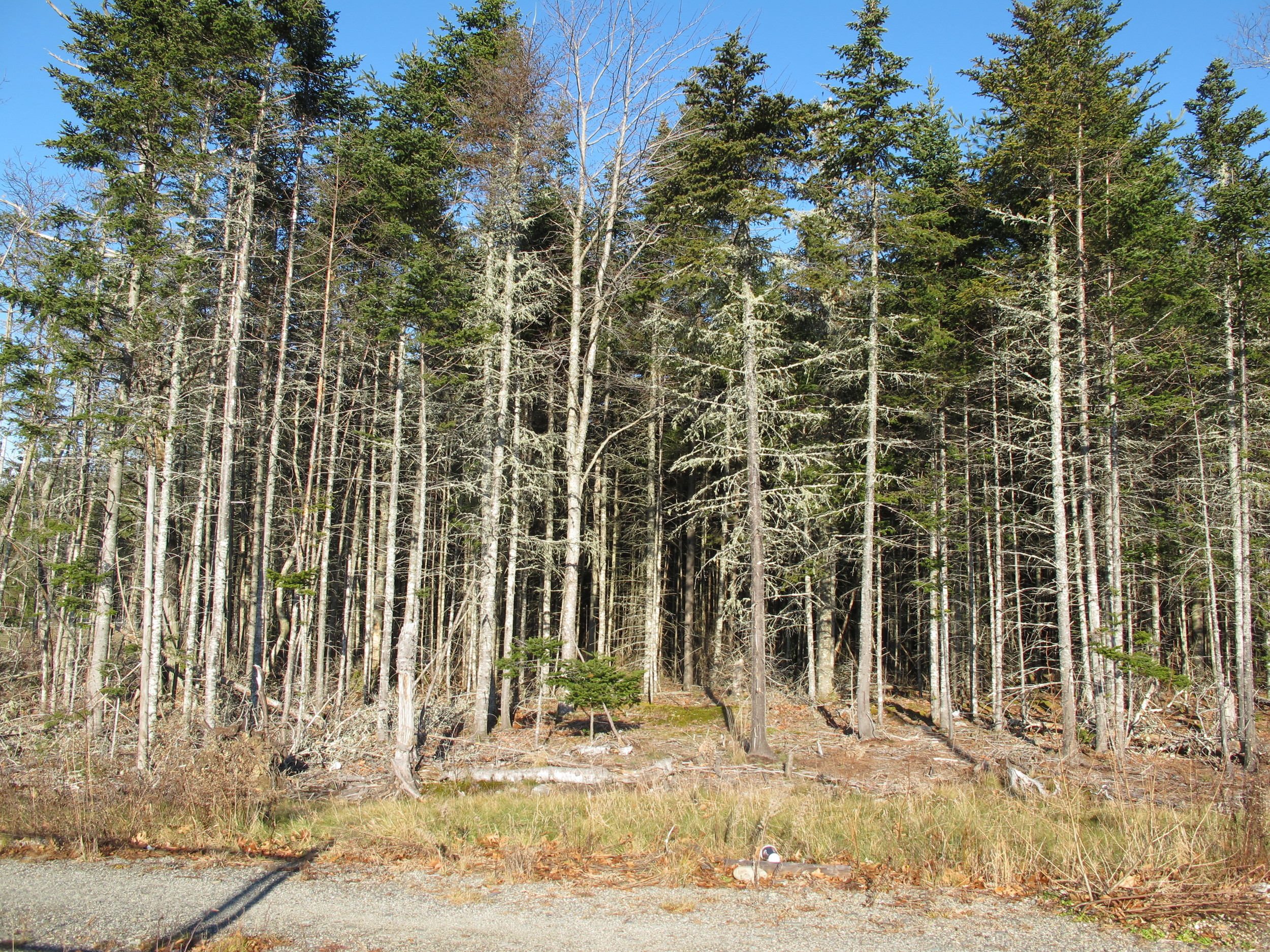 The forest at the edge of the parking lot offers a glimpse of what once covered the hilltop.