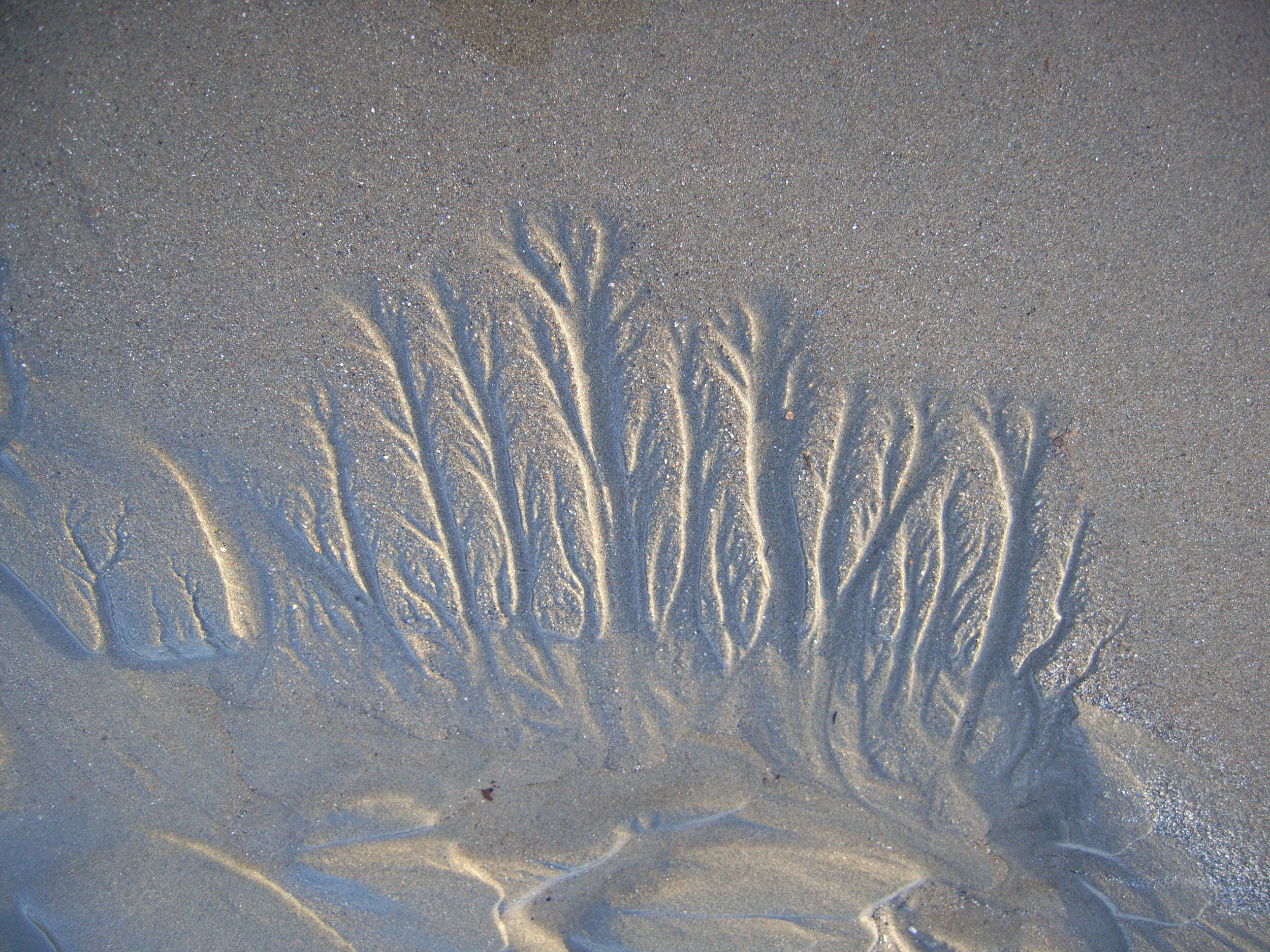 A delicate fractal pattern made by the waves at Seal Harbor beach.