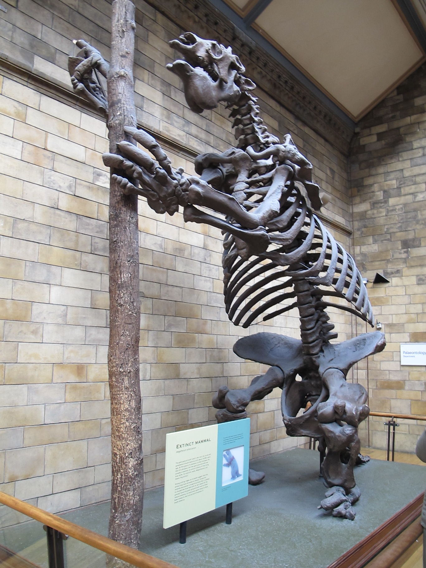 Here's the giant ground sloth we saw in London. These now-extinct mammals were more than 12 feet tall when they stood erect.