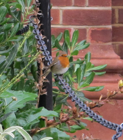 I'll give you one for your bird list: the European robin. We photographed this one in England in October.