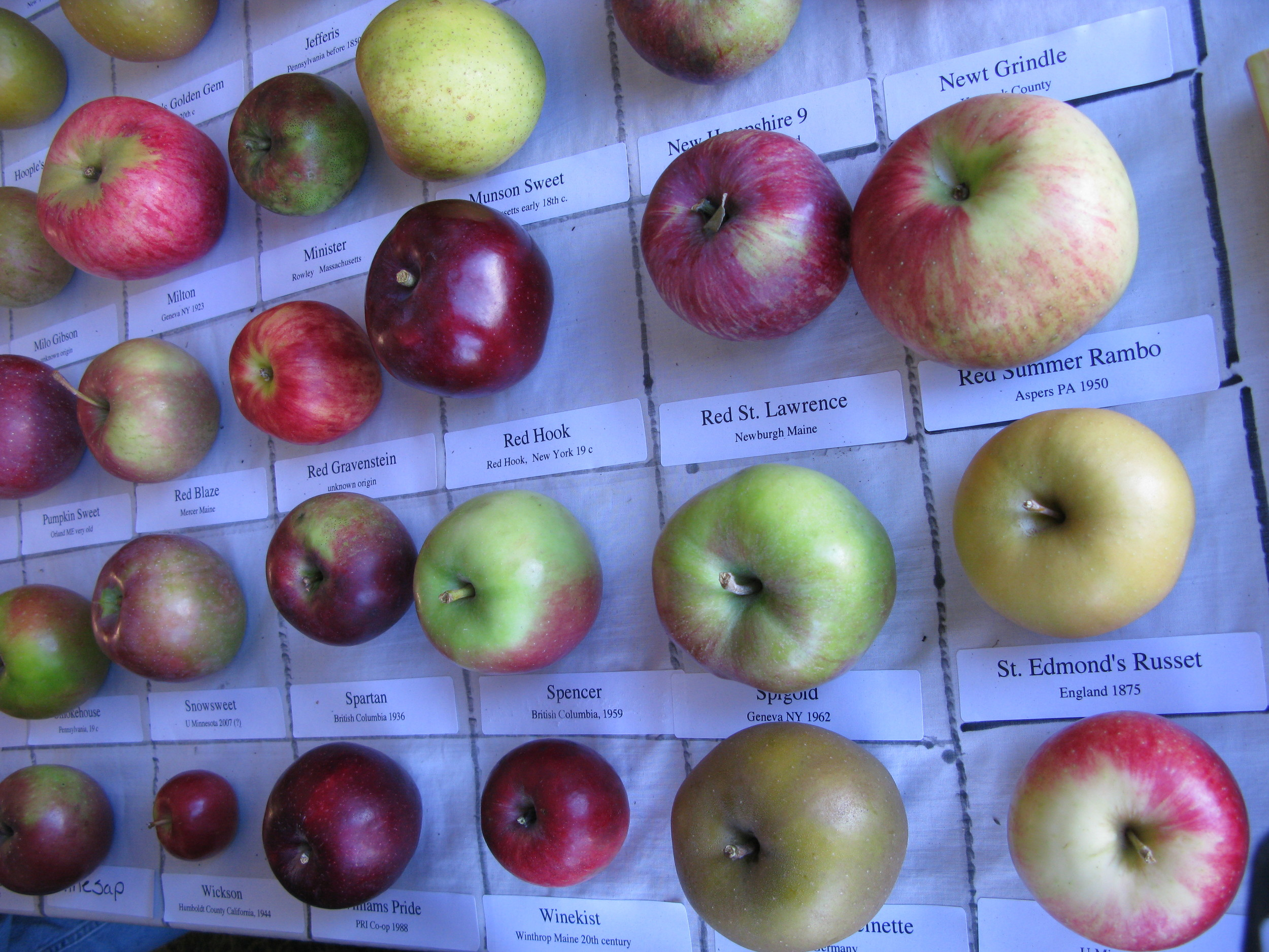 The fair is known for its display of rare heritage apples–believe it or not, Maine used to have 10,000 varieties.