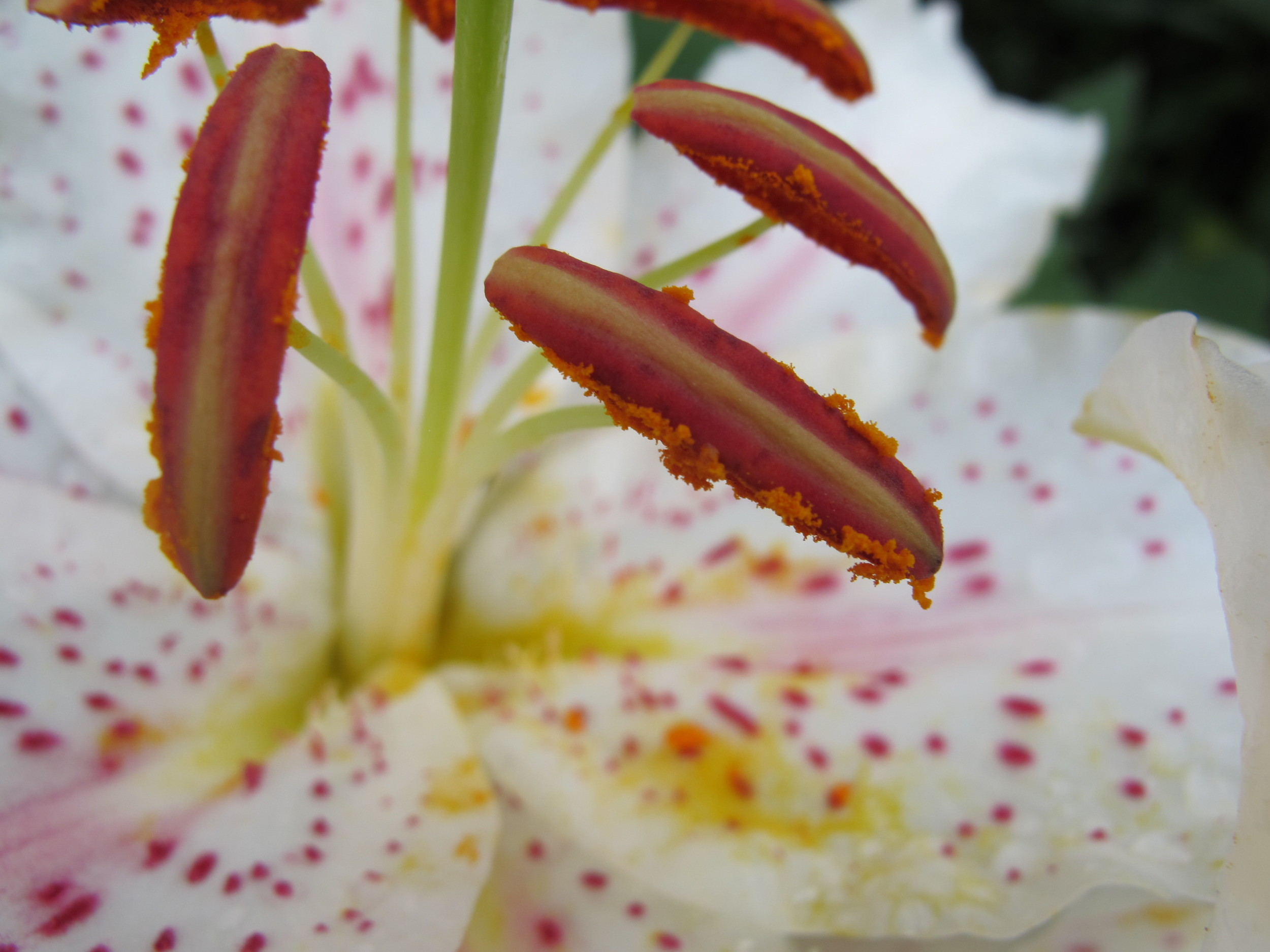 Can you identify the parts of this lily?