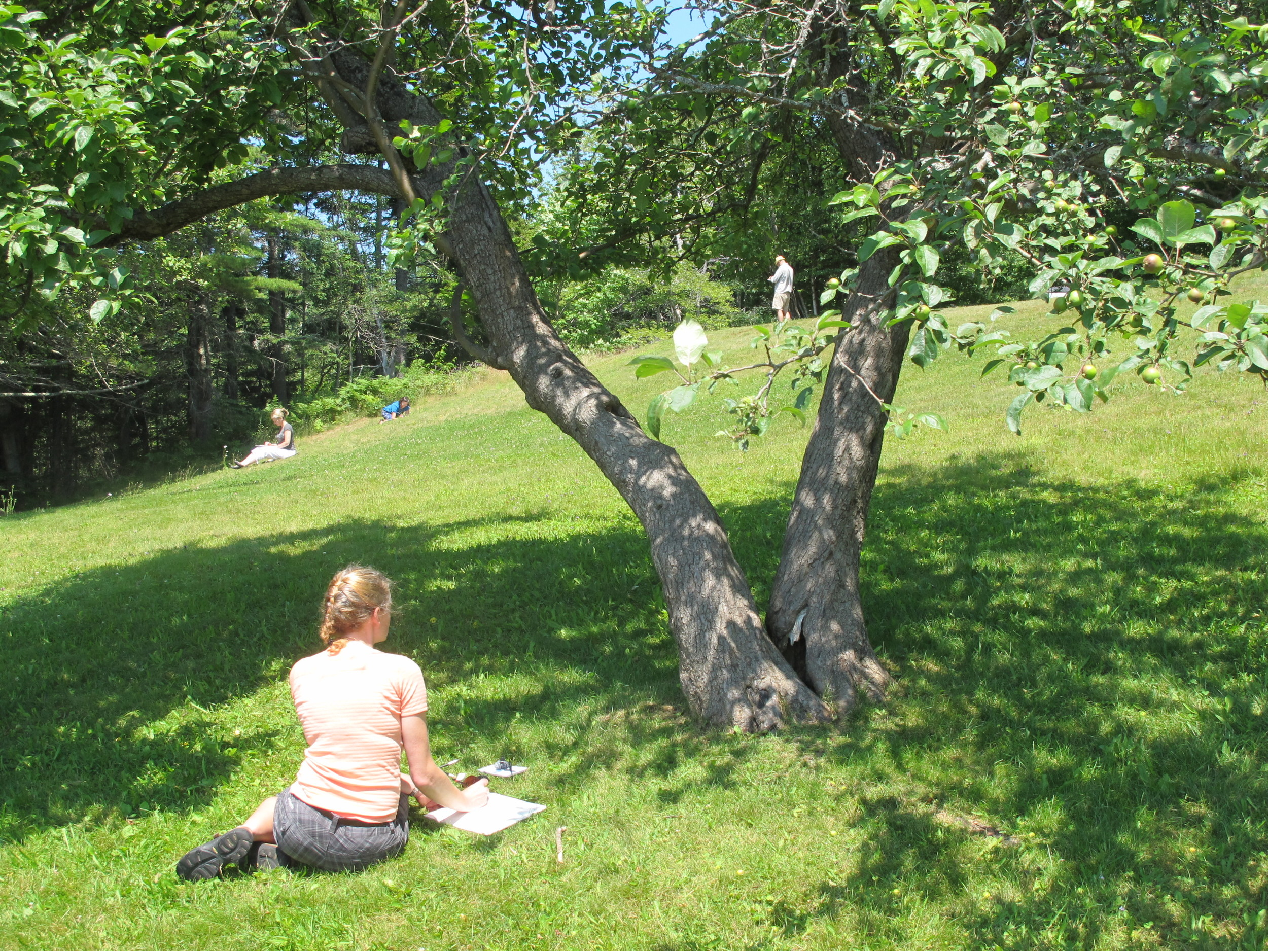 Our artists at work on an apple-tree-shaded hillside that overlooks the sandy beach in Seal Harbor.