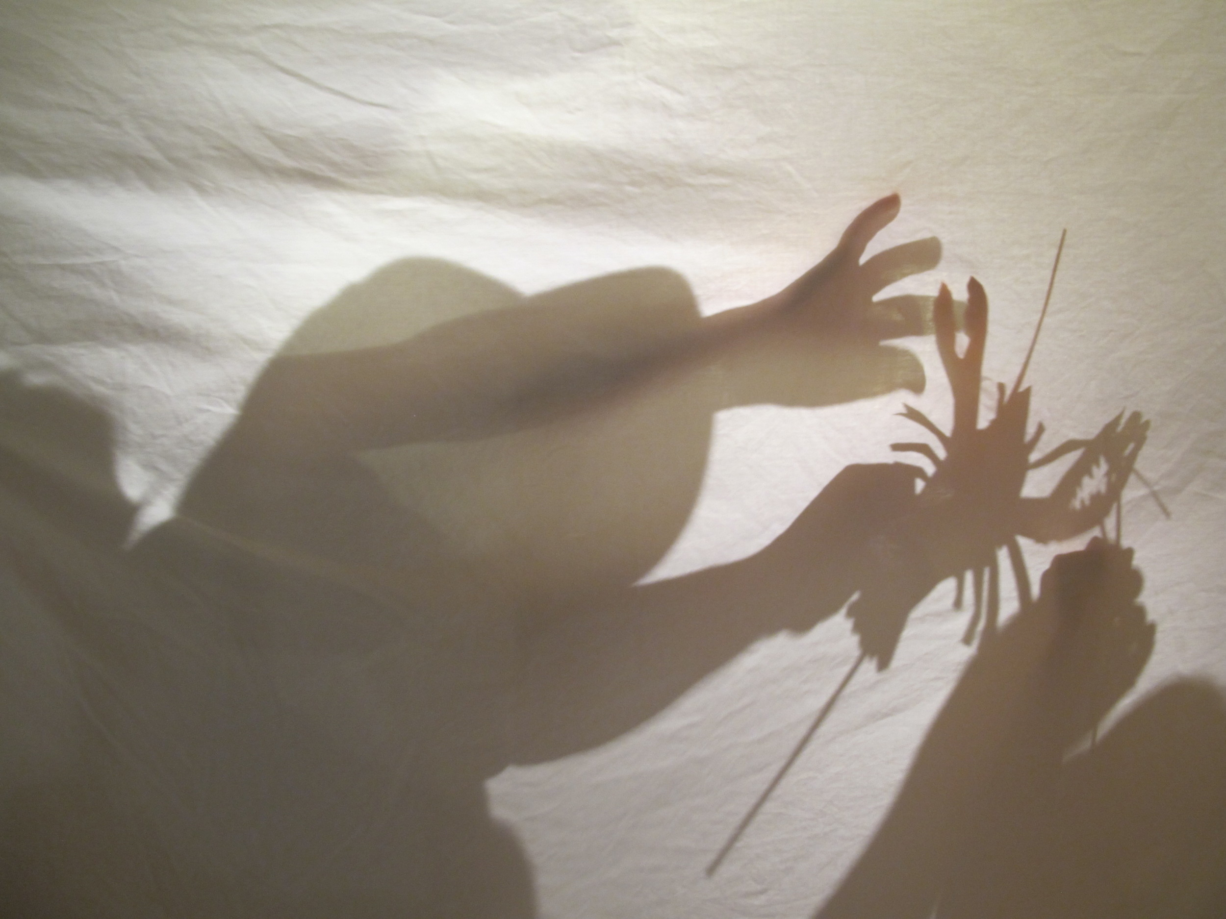 Our shadow-puppet-making workshop yesterday brought all sorts of sea creatures—and creative children—to life.