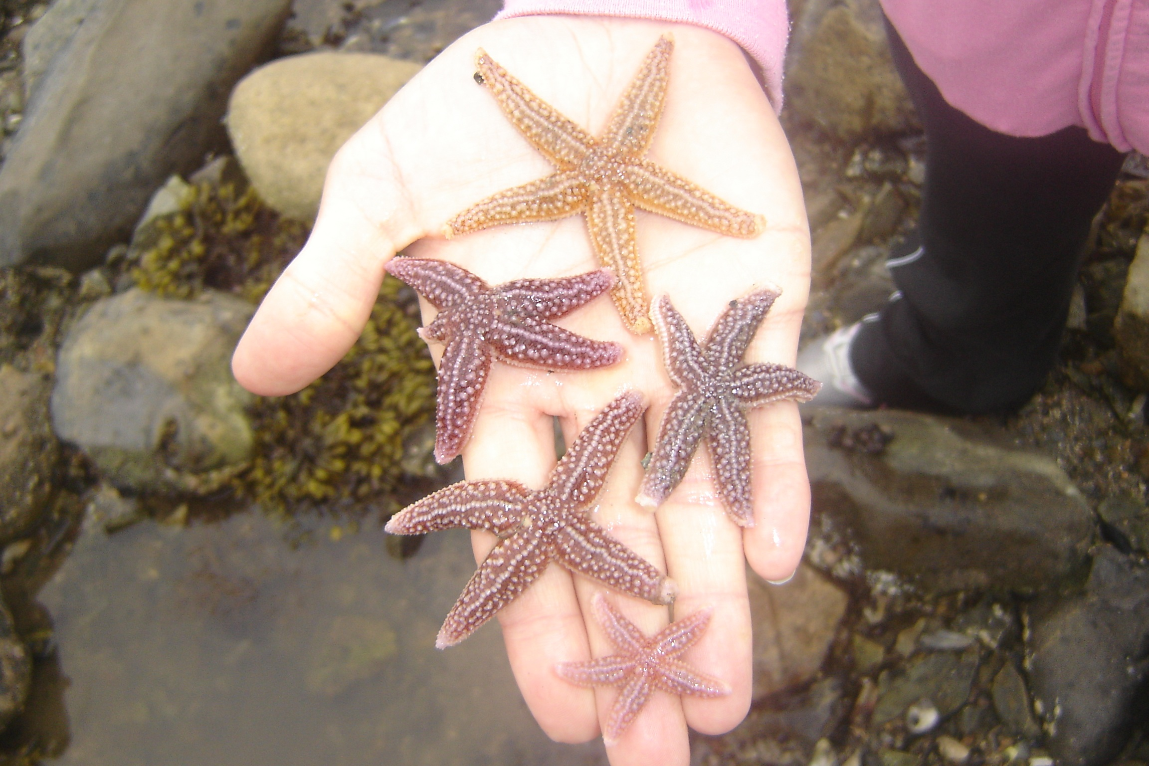 A multicolored collection of sea stars from their outing.