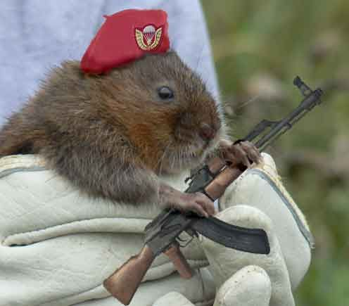 Vole-army, oh oh...?