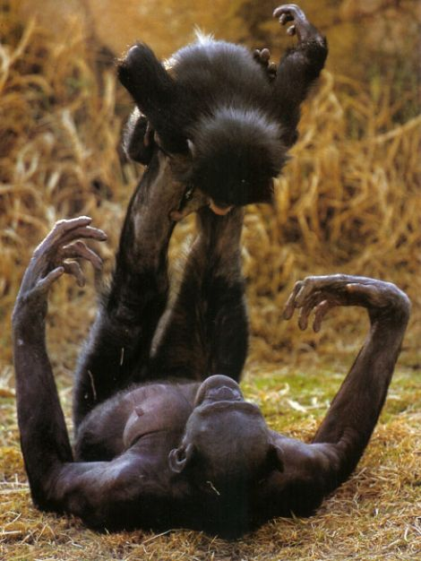 Bonobos have a female-dominated society for which the motto could be either Make love, not war or Girls just want to have fun.