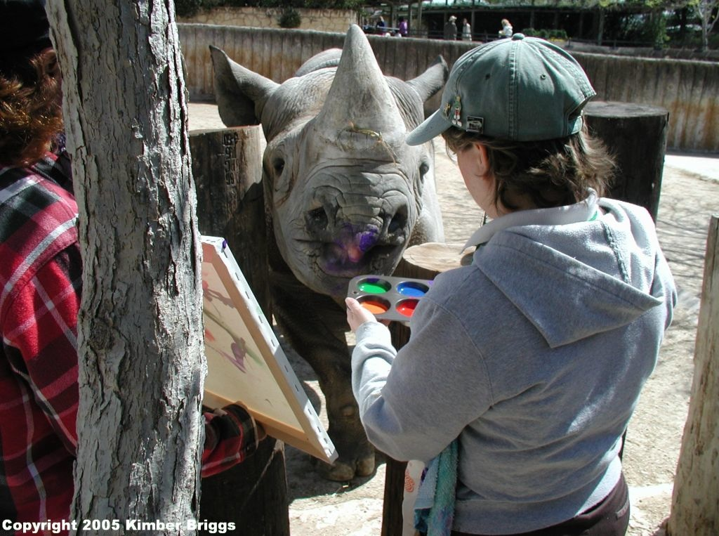 Kimber (right) began teaching Herbie to paint in 1999 at the San Antonio Zoo.