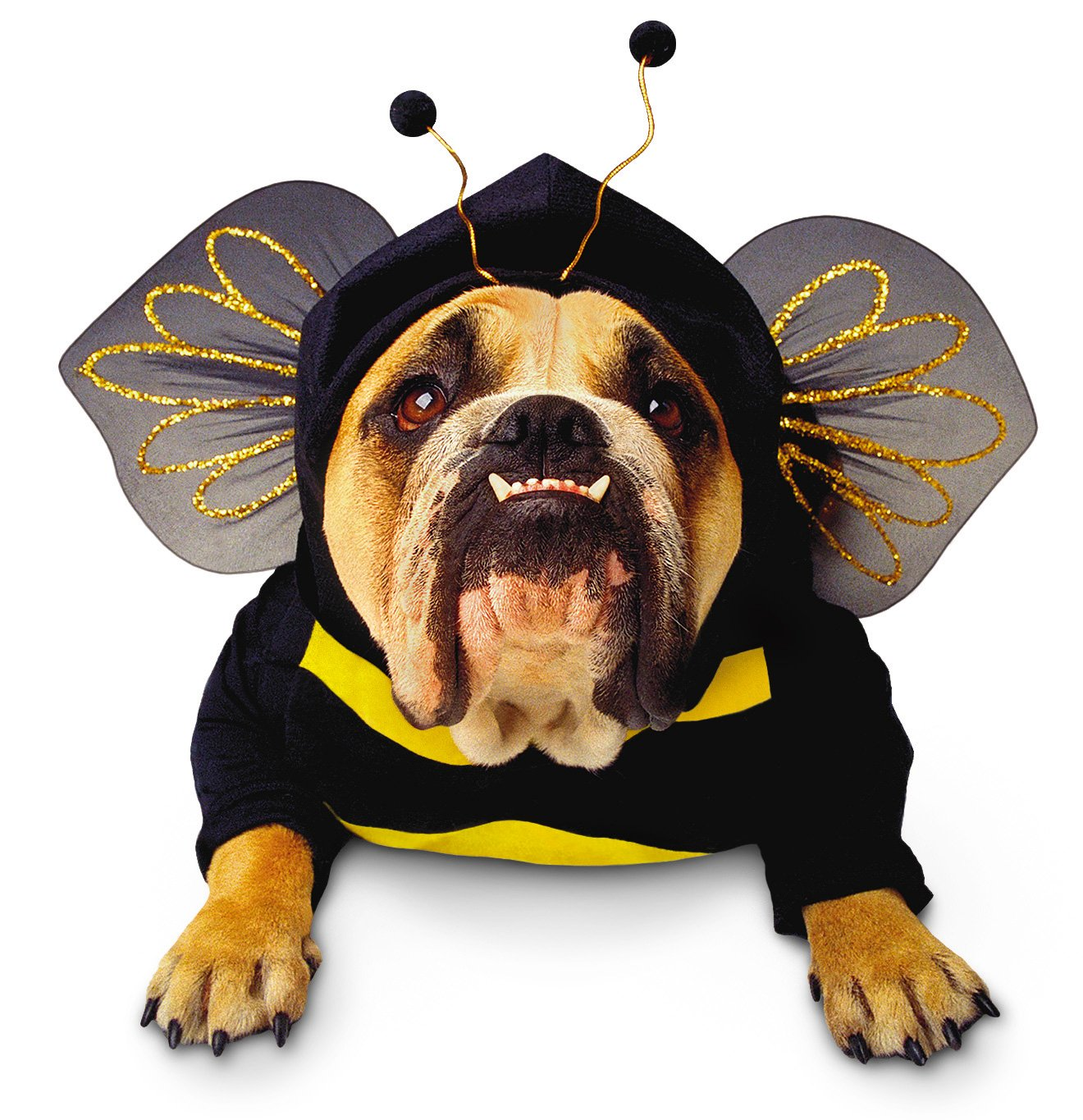 Who wouldn't want to fly like a bumblebee?