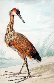 An Aert Schouman painting called A Purple Heron on a Sand Bank, done in a combination of watercolor, black chalk and pen and ink. The purple heron is a wading bird found in Africa, Asia and parts of Europe.