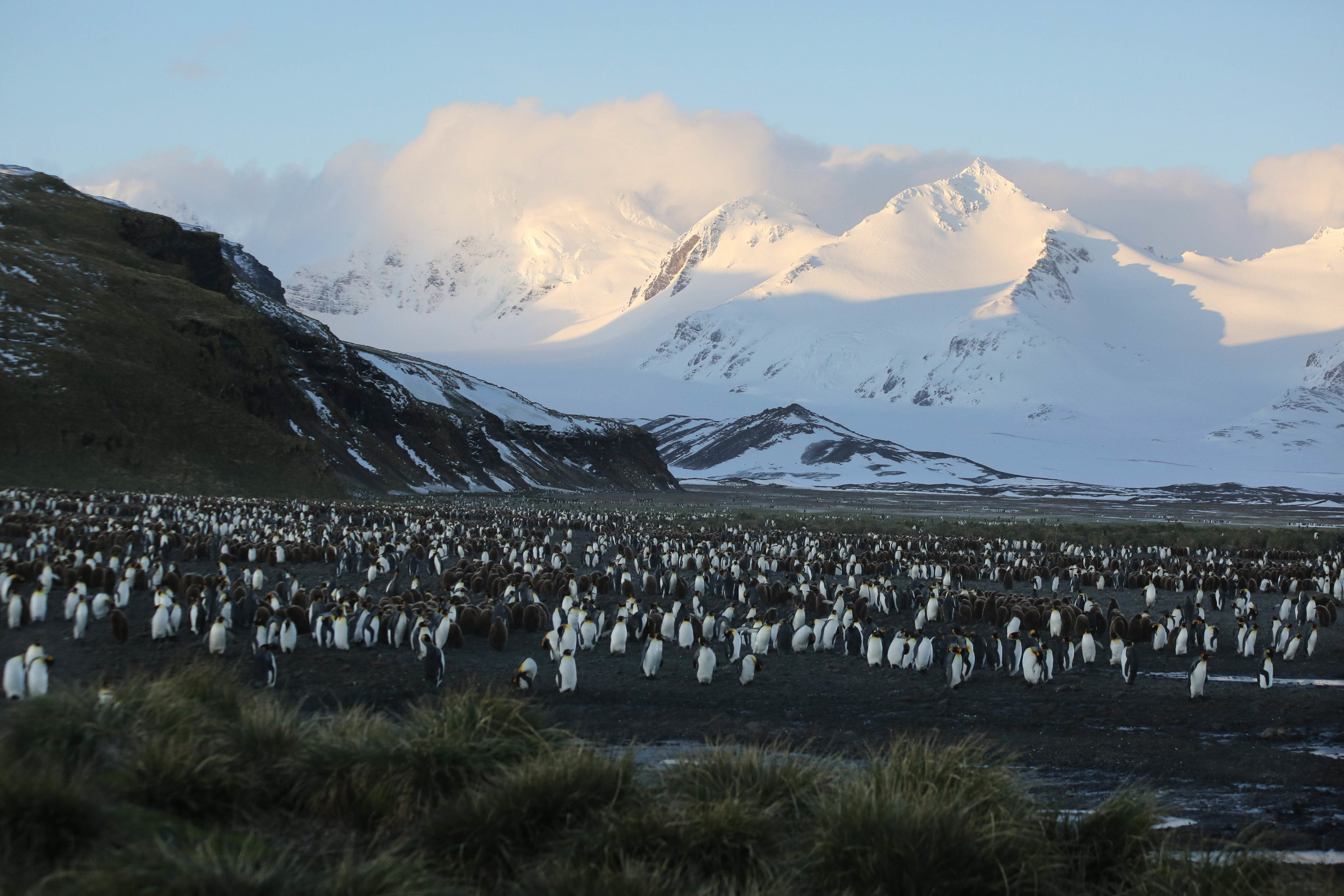 We arrived at Salisbury Plain on South Georgia Island in time to watch the Sun rise over a vast expanse of king penguins and elephant and fur seals.
